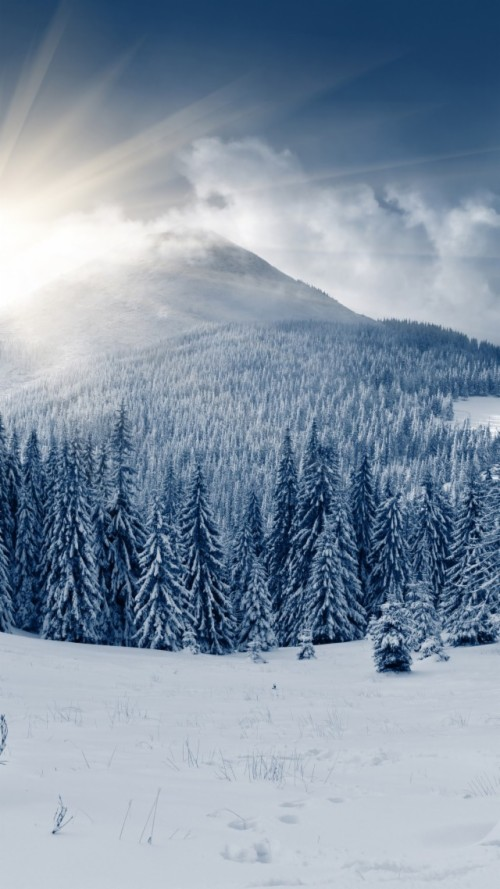 Nature Snowy Winter Forest Trees Wallpapers Calvin And
