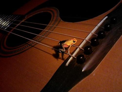 Guitar Wallpaper Wall Classical Guitar 110708 Hd