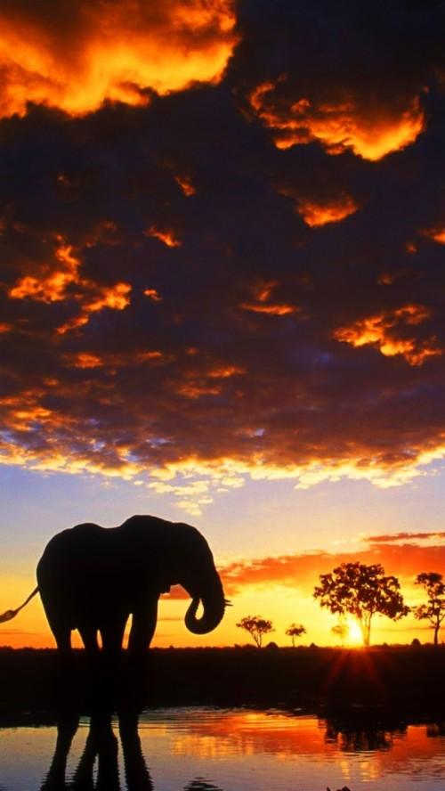 Wallpaper Iphone Elephant Backgrounds 119344 Hd Wallpaper