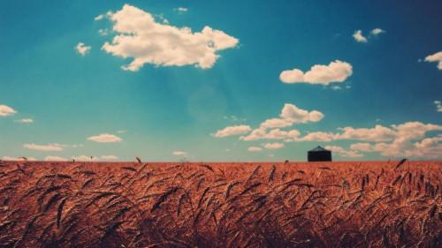 Iphone 6 Wallpaper Request Thread Field Of Wheat Best