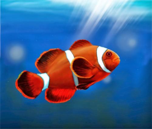 530+ Wallpaper Ikan Bergerak Untuk Hp Android HD Terbaru