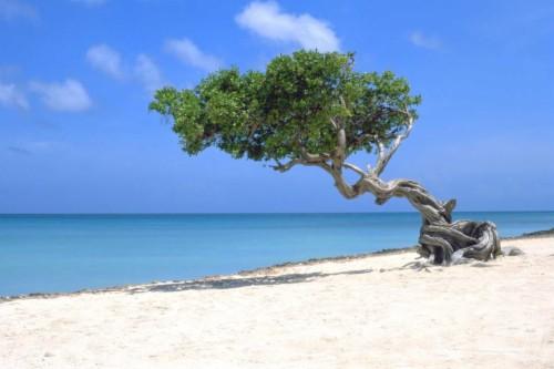 Beautiful Caribbean Beach In Aruba Aruba Beaches 1380527