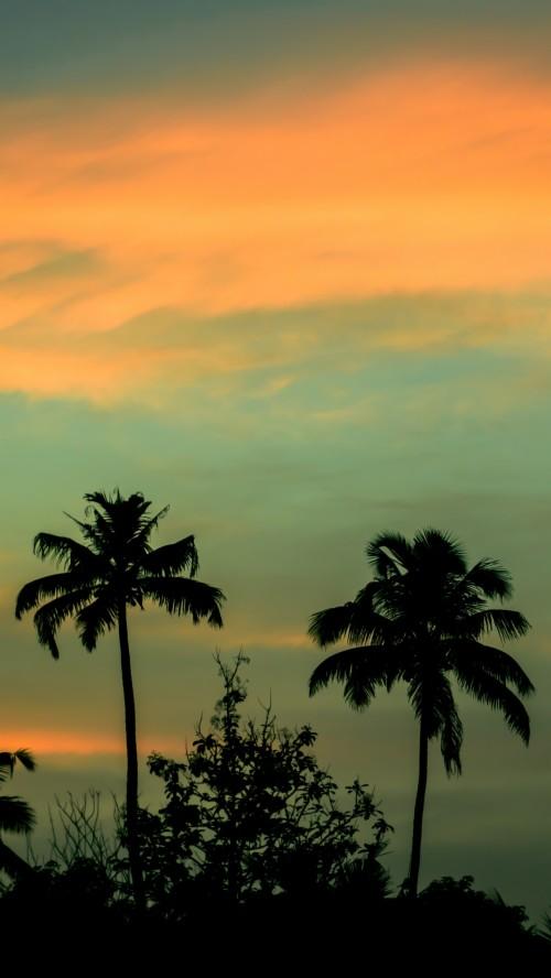 Wallpaper Palms Sunset Sky Palm Trees Wallpaper Iphone X