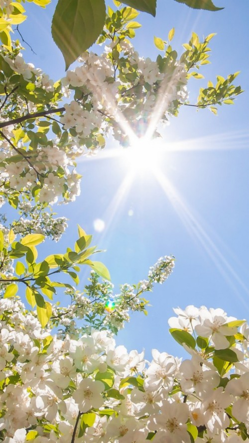 List Of Free Spring Wallpapers Download Itl Cat