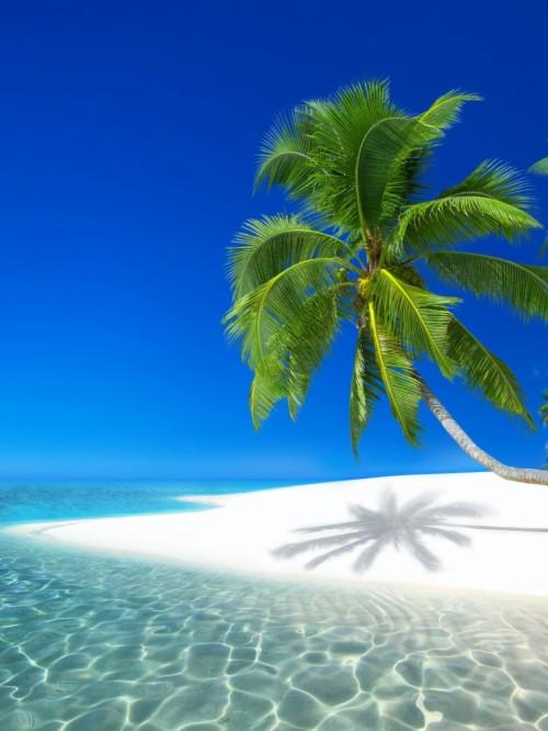 Seychelles Resort Ocean Holiday Beach Island