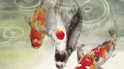 Koi Fish Wallpaper Japan Carp Japanese Koi Fish 1599761