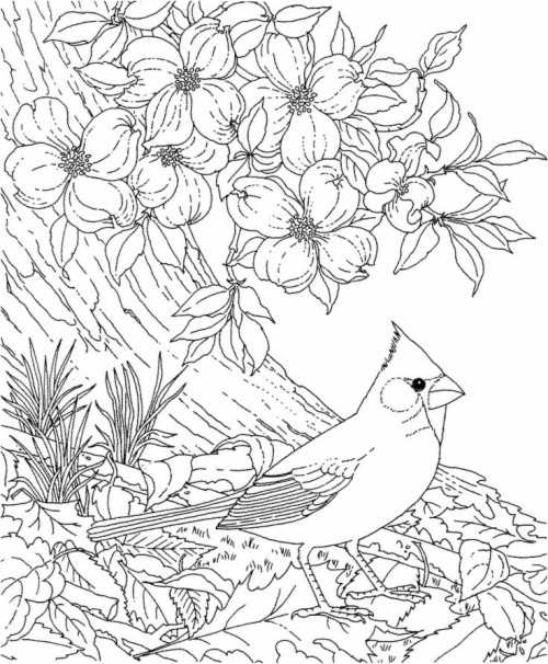 Free Printable Coloring Page North Carolina State Bird ...