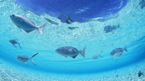 Tauchsafari ägypten Background Fish In Sea 772943 Hd