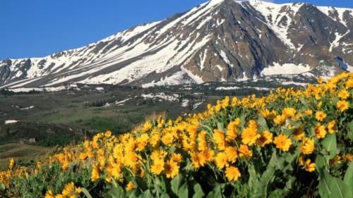 186 1869368 imagini desktop primavara wallpaper california green mountains