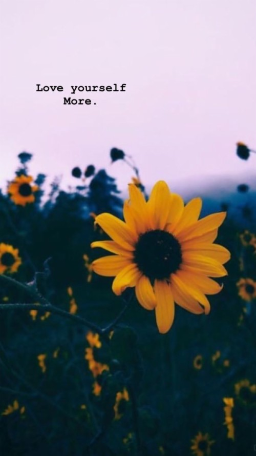 Aesthetic Sunflower Computer Background 371810 Hd