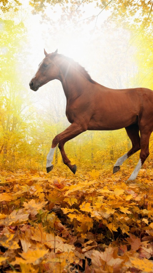 Horse Wallpapers For Iphone 1892975 Hd Wallpaper