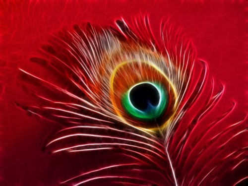 Wallpapers Of Peacock Feathers Hd Peacock Feathers Images