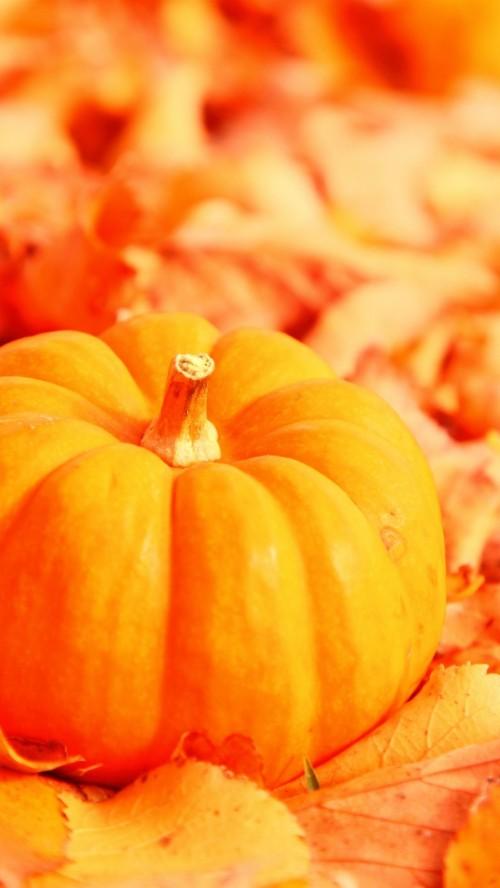 Iphone Halloween Wallpaper New Happy Halloween Bilder