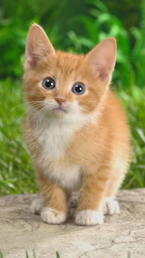 Cute Cat Wallpaper Iphone Cute Invasive Species Animals