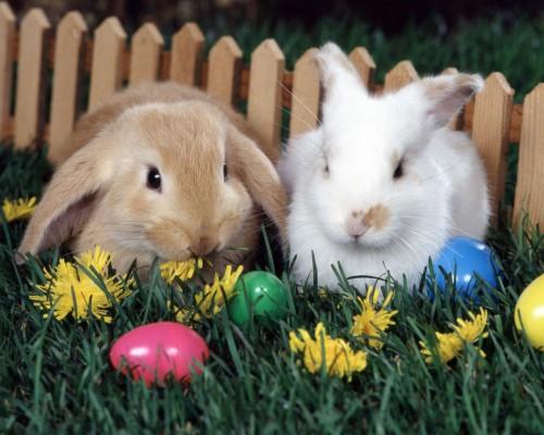 Wallpaper Dog Rabbit Eggs Easter Basket Easter Eggs