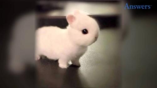 Download Cute Baby Bunny Wallpaper Animals Cute Baby Bunny