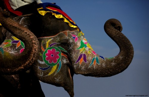 Indian Elephant 809315 Hd Wallpaper Backgrounds Download