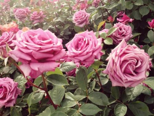 Flower Garden Wallpaper Free Download Pictures Of Gardens Beautiful Flowers Home Garden 2015515 Hd Wallpaper Backgrounds Download