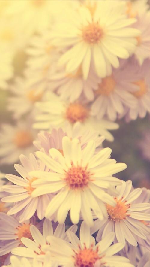 yellow flower wallpaper iphone 32438 hd wallpaper backgrounds download yellow flower wallpaper iphone 32438