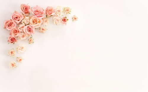 Multicolored Rose Rose Background For Laptop 944626