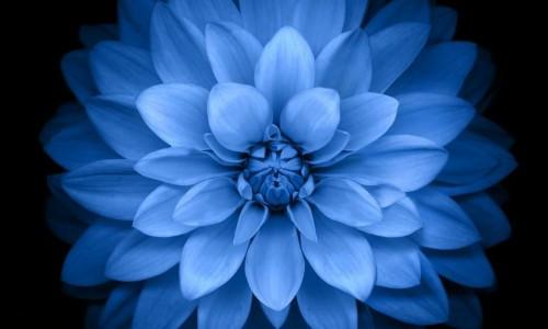 576 Live Flower Wallpaper Iphone 2056872 Hd Wallpaper