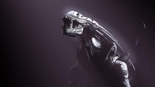 Xenomorph Wallpaper Prometheus Aliens Alien Xenomorph