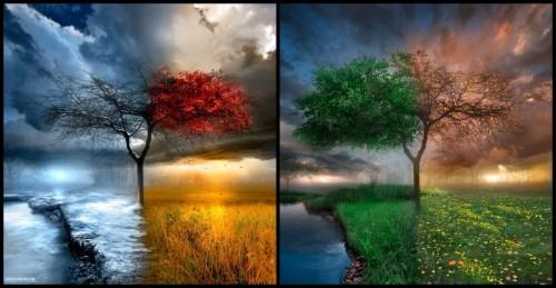 Landscape Trees Water Clouds Seasons Four Seasons Wallpaper