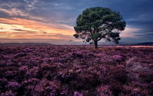 Beautiful Spring Landscape Scotland Wallpaper 968571