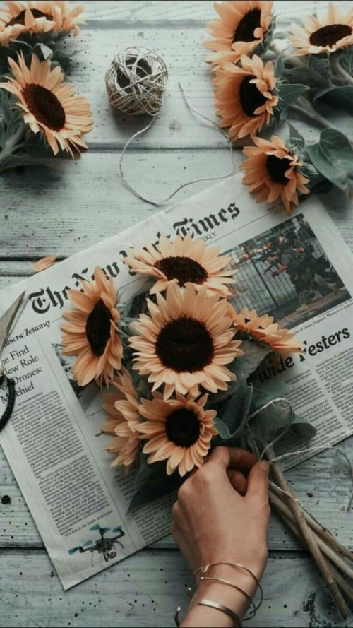 Sunflowers Aesthetic Wallpapers Phone Backgrounds Fondo De Pantalla Imagenes 1063539 Hd Wallpaper Backgrounds Download