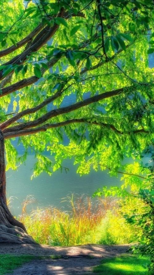 Picsart Blur Nature Background Hd 2390976 Hd Wallpaper Backgrounds Download