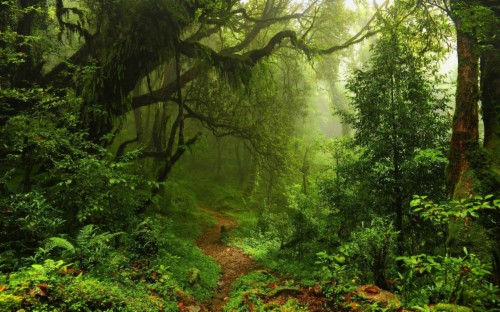 Landscapes Trees Forest Ferns Path Plants Moss Nature