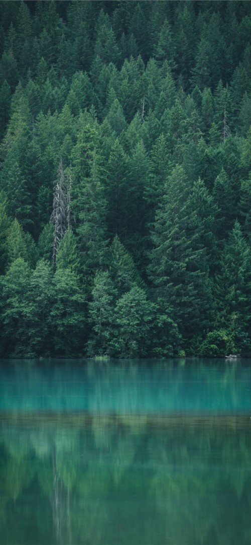 Iphone 11 Pro Wallpaper Forest 2444693 Hd Wallpaper Backgrounds Download