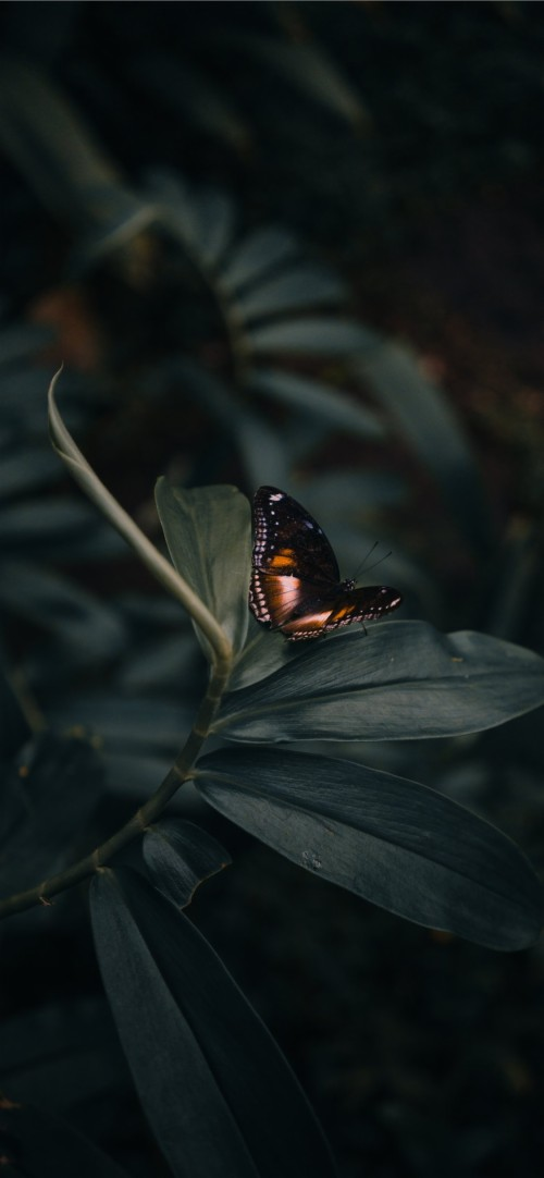 Image Result For Butterfly Wallpaper Tumblr Butterfly Iphone Background 985416 Hd Wallpaper Backgrounds Download