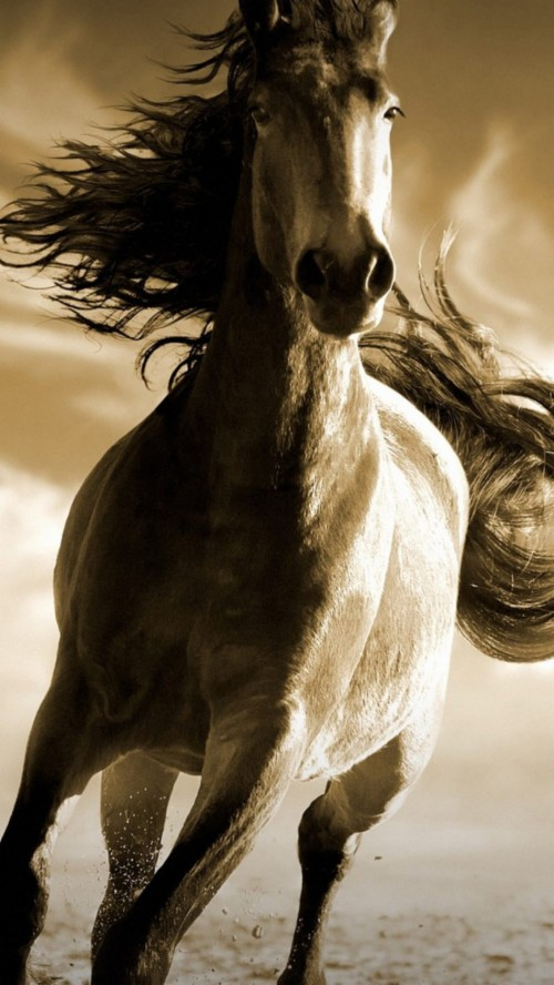 List Of Free Running Horse Wallpapers Download Page 3 Itl Cat