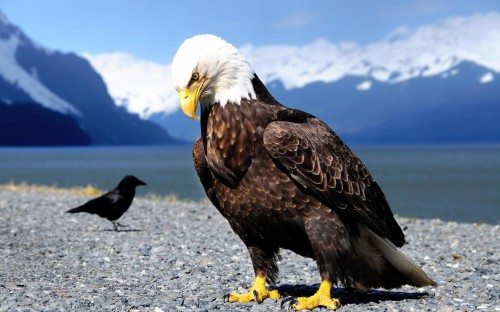Black And White Wallpaper Black And Red Eagle 1595883 Hd Wallpaper Backgrounds Download