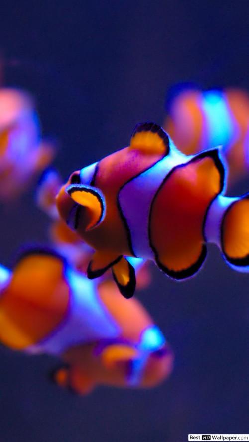 Iphone Fish Live Wallpaper 368471 Hd Wallpaper Backgrounds Download
