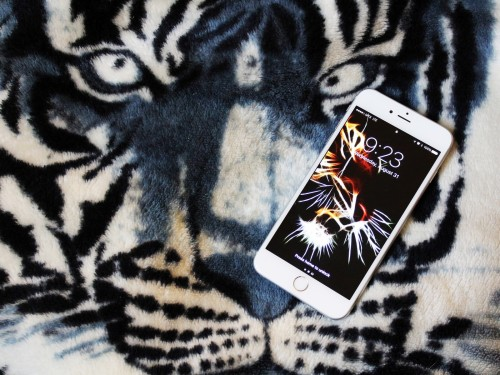 284 2846212 get your eye of the tiger on with