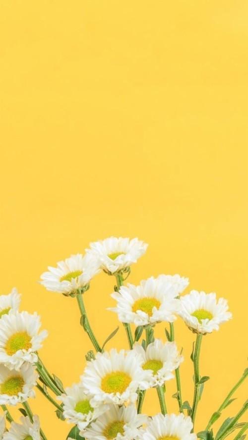 Yellow Flower Wallpaper Iphone 32438 Hd Wallpaper Backgrounds Download