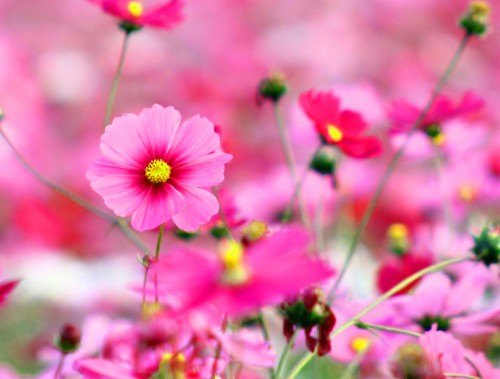 Beautiful Images For Whatsapp Dp With Flower Nature