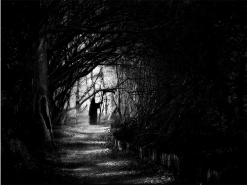 Dark Forest Wallpapers High Resolution Background 1 Black