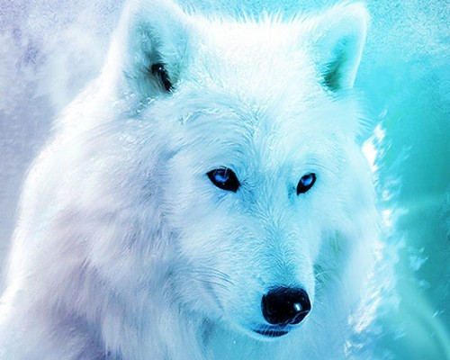Live Wolf Wallpaper Free Blue Animals 369064 Hd Wallpaper Backgrounds Download