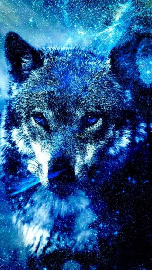 Galaxy Galaxy Wolf 102852 Hd Wallpaper Backgrounds Download