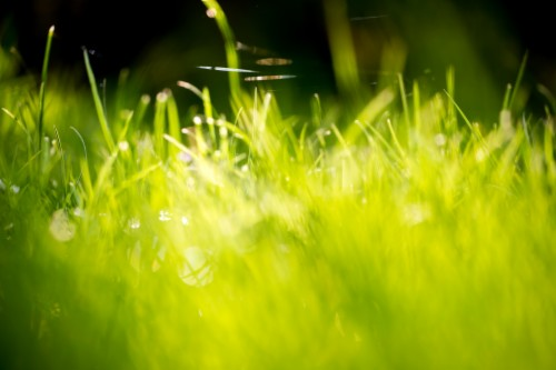 Wallpaper The Background Graphics Grass 863969 Hd
