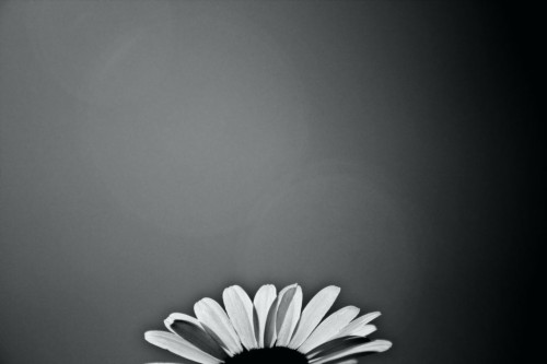 Enchanting Black And White Flower Wallpaper And Black