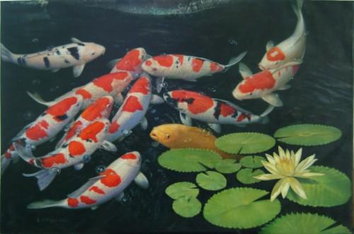 Underwater Water Carp Fish Pond Koi Hd Wallpaper Koi