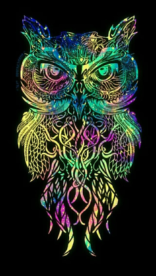 Colorful Owl Illustration Iphone Wallpaper New Owl Art