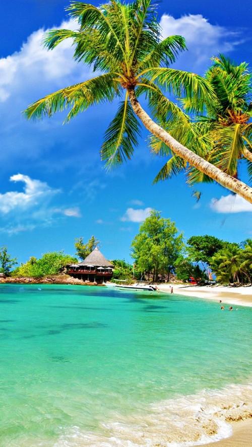 List Of Free Tropical Wallpapers Download Itl Cat