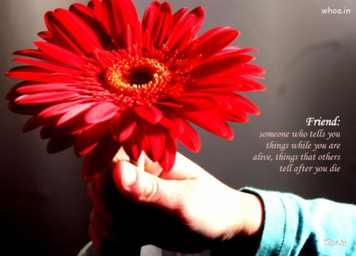 friendship quotes related flowers hd