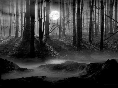 Black And White Pictures Anime Forest 34 Wide Wallpaper Dark Forest With Moon 695310 Hd Wallpaper Backgrounds Download