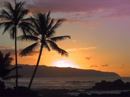 Coconut Trees Wallpapers Beach Scene High Resolution